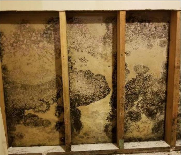 Mold Remediation Is There A Correct Way To Stop Mold Growth?